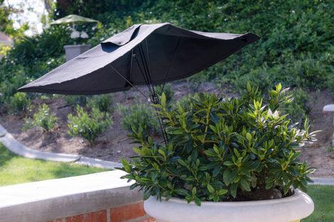 Black Frame & Canopy